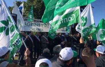 Olivicoltori in protesta a Lamezia, corteo dei trattori attraversa la città