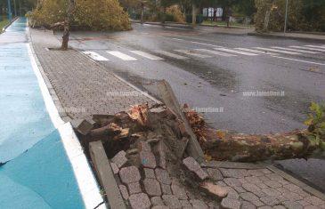 Lamezia: forti piogge e raffiche di vento, danni in città. Sospeso anche consiglio comunale